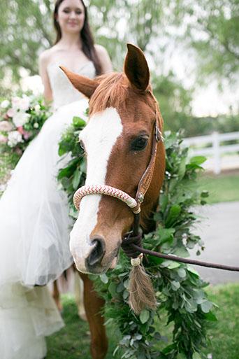 FairyTale-Wedding-Horse